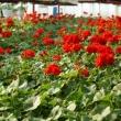 Balogh Kertészet