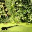 BotanikArt