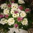 Moncsika Virágüzlet