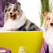 Rózsavölgy Kutyakozmetika