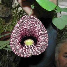 Bene László Orchidea- és Egzótakertje
