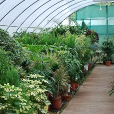 FitoLand Kertészet - Budafok