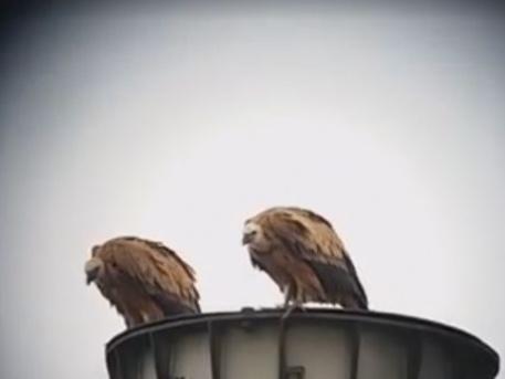 Egy képkocka a videóból