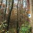 A kék kereszt jelzés - lemázolatlanul - a Budai-hegységben