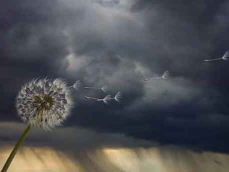 Fotó: jaszhir.hu
