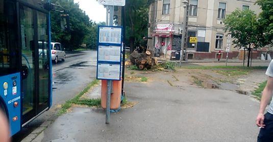 Vágják a fákat Budafokon